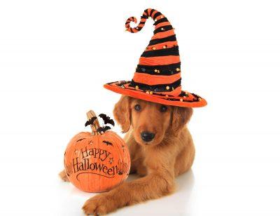 Les chiens et l'Halloween