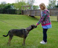 Fille approchant un chien