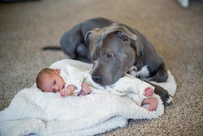 Pitbull et bébé