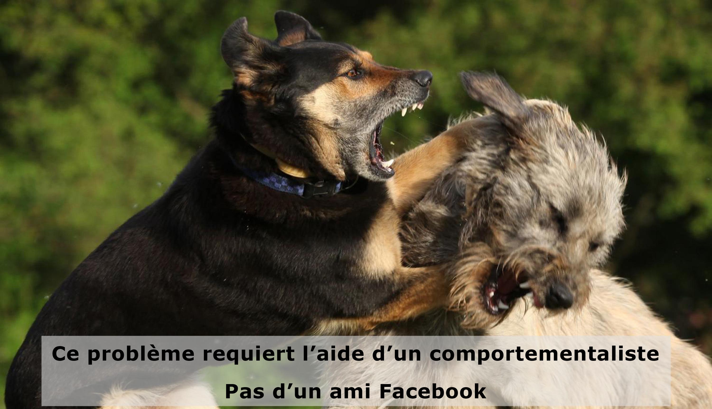 Conseils pour chiens sur Facebook
