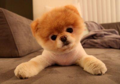 le syndrome du petit chien cute