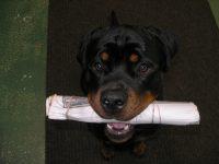 Comment rendre votre chien utile