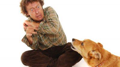 Thérapie Peur des chiens