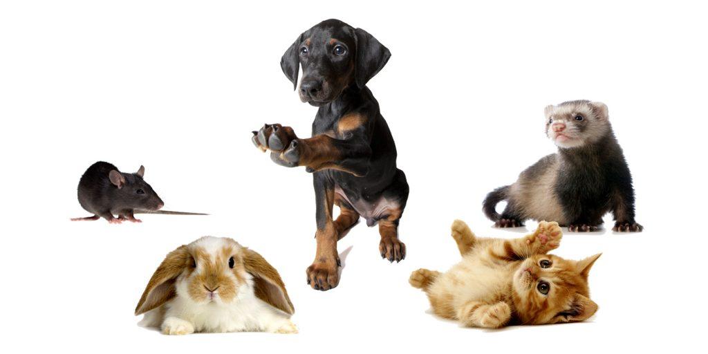 Les animaux et le clicker