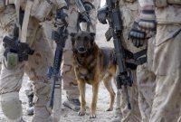 Les chiens de guerre