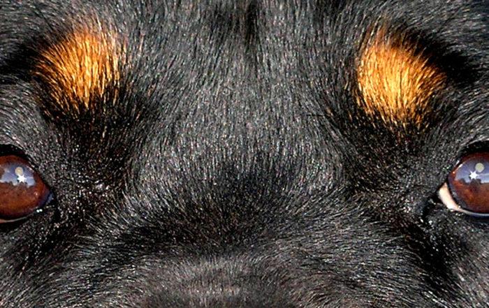 Regarder un chien dans les yeux